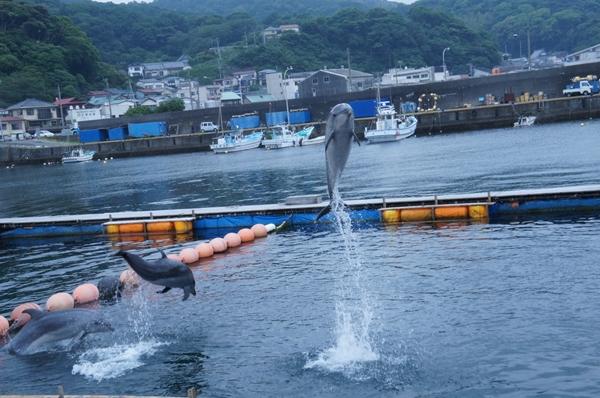 ito port dolphin