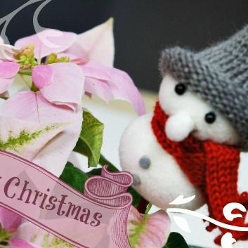 ☆プリンセチア クリスマス