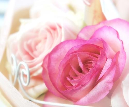 6メッセージ入りバラ花束 レターローズ
