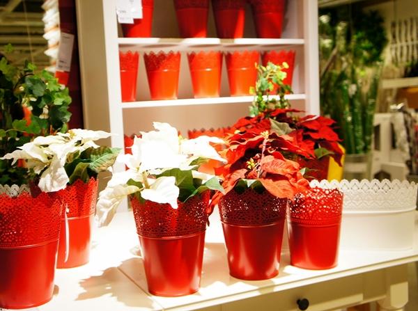 イケア 観葉植物 ポインセチア クリスマス