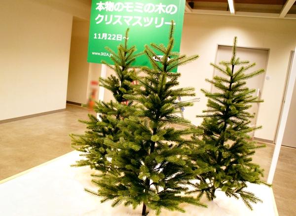 イケア港北 クリスマスツリー 本物モミの木