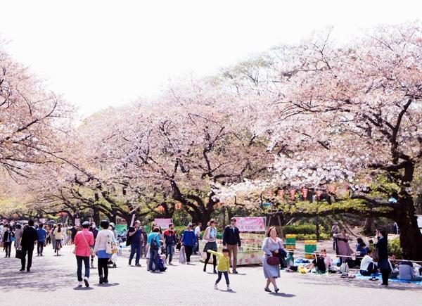 上野公園 2014 桜 花見