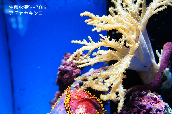 沼津港深海魚水族館